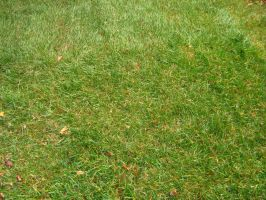 Stock Grass 1 by Camo-Stock