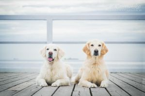 Two golden ladies by Sarkolia