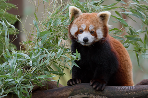 Surrounded by bamboo. by Ravenith