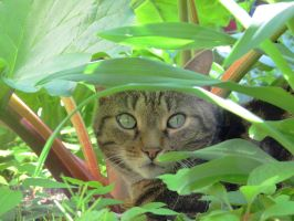 Green Eyes in the Greenery by Kitteh-Pawz
