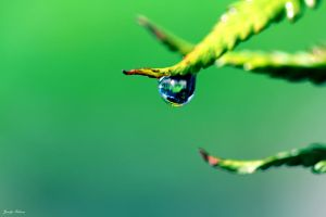 Natures tears by lilfrogs