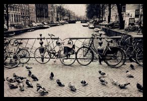 Amsterdam. Part 2. by Bunnis