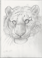 Tiger sketch by iiDragonfantasyArt