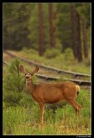 grand railroad rain deer by PeterJCoskun