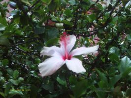 Disney Hibiscus 2 by Dragonetti707