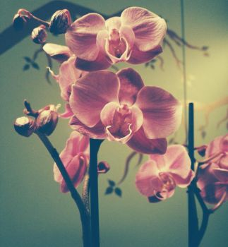 Orchid by Decial