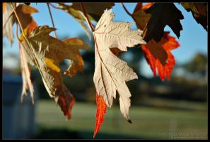 Fall_2004 by delobbo