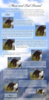 Manes and Tails for Beginners by Misty-B6