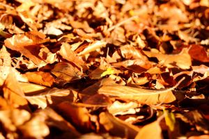 Autumn Leaves by GailJohnson