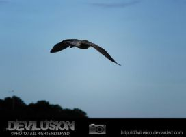 IMG_5062 by D3vilusion