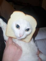 cat bread by IllRebel2Anything