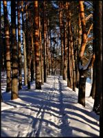 Striped winter path... by Yancis