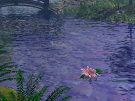 Pond by curious3d