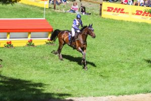 DHL Water Obstacle Series Bay Gelding Pt 3 by LuDa-Stock