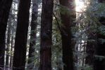 Stock | Muir Woods by ShadowsStocks