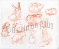 Rabbits...development by davidsdoodles