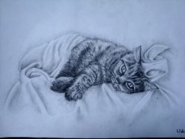 cat in bed. by BlancPrincesse