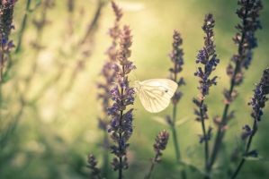 Butterfly by Lindqvist