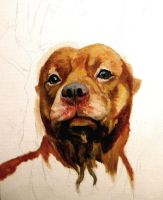 WIP - Pitbull painting by SuzanneMoseley
