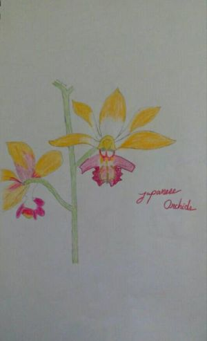 Japanese Orchids by madhatter2894