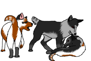 Pups for Nobody-wasnt-here by Sierra2882