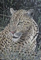 leopard portrait by acrylicwildlife