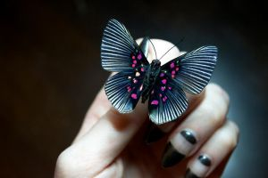 Apolly Metalmark Butterfly by TheButterflyBabe
