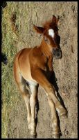 lying-walking colt by mefista