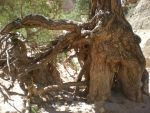 Gnarled Roots 6 by DrachenVarg-stock