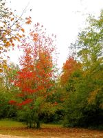 Some fall pics I by Heidipickels