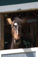 My Horse Is Zoolander by cgray0983