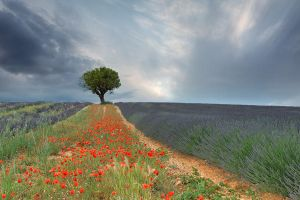 Icones of Provence by Addran