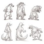 Animal Proportion Practice (Badger/Otter) by Temiree