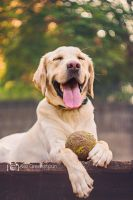 Happiness is a big, muddy tennis ball by alexgphoto