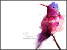 Hummingbird Heartbeat 2 by inkrush