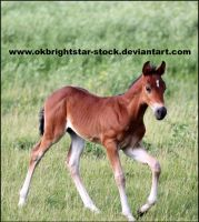 Friendly Mare Foal 11 by okbrightstar-stock