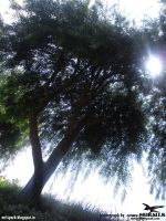 trees with sunlight (photograph by spark MURALI.K) by sparkmurali