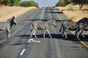 Zebra Crossing by Caatherinee
