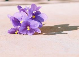 violets by caitlinlawrence