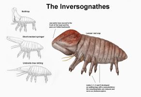 REP: The Inversognathes by Ramul