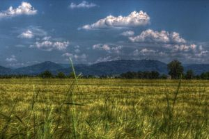 grassland HDR by Akechi18