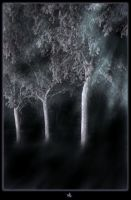 The Daughters Of Night Tree by IMustBeDead