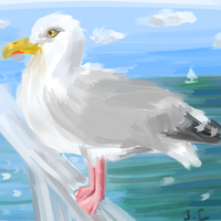 Seagull by canned-sardines