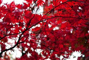 Autumn Is Here. by ninaheather