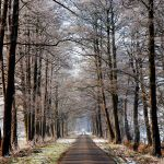 last days of winter by augenweide