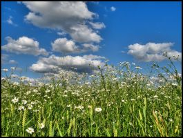 In flowering field by Pildik