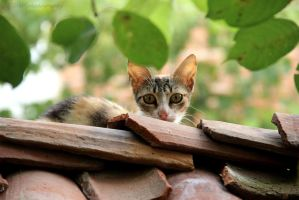 The Cat On The Roof 3 by weedenstein