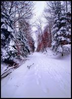 Endless snow by JoInnovate