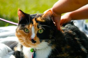 Calico Cat by littleteardrop
