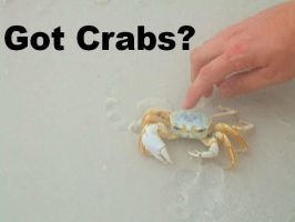 Crabs. by Inuyashainu1